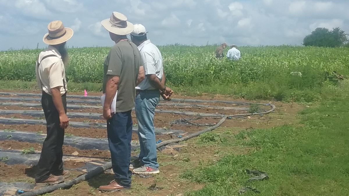 Farmers and researchers at reverse field day