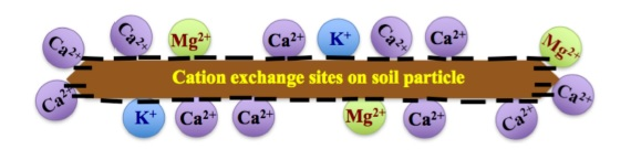 Figure 1. Cation exchange sites on soil particles