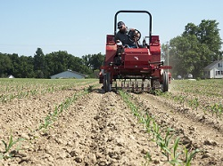 Cultivation trials with Tilmor