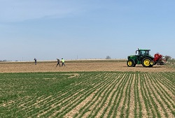 planting oats trial