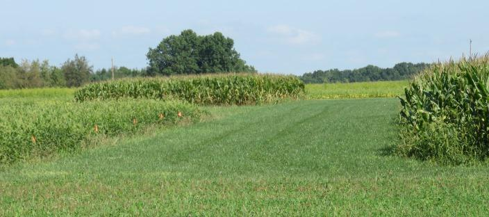 certified organic research fields at Ohio State